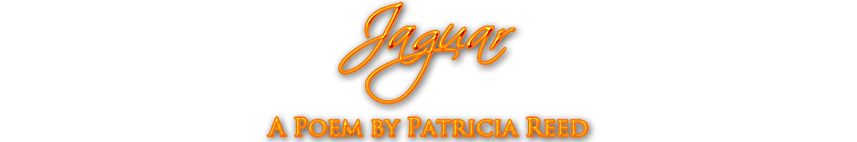 Jaguar a Poem by Patricia Reed orange