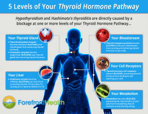 thyroid conversion pathways